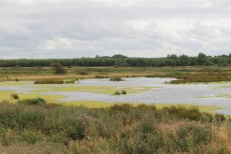 The wetland landscape at Lunt Meadows Nature Reserve