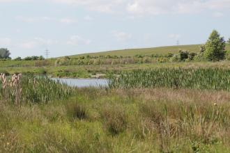 A pond surrounded by grass at Freeman's Pools nature reserve