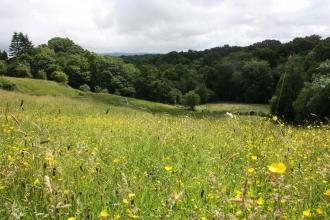 A field full of wildflowers at Freeman's Pasture nature reserve