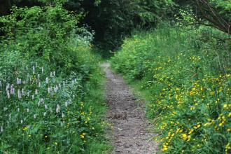 Wildflowers bordering a path at Foxhill Bank nature reserve