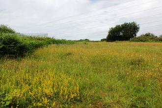 A field of wildflowers at Heysham Nature Reserve