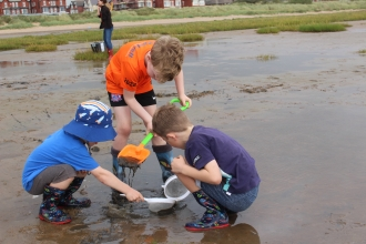 Children digging into coastal mud at a mud dipping event