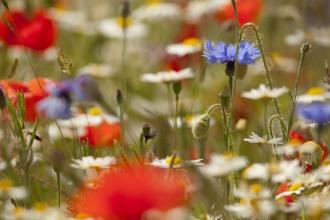wildflower meadow by Paul Hobson