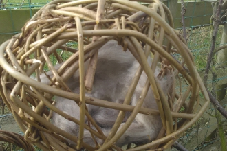A willow ball made by children during a workshop at Heysham
