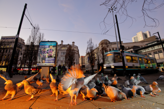 Feral pigeons in Manchester - Terry Whittaker/2020VISION
