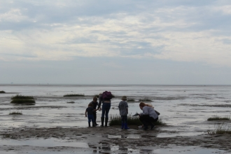 A group of people searching for wildlife in the mud at a beach