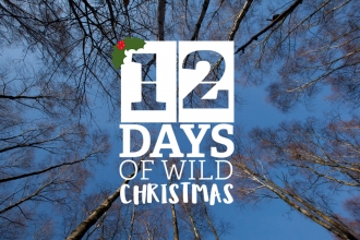 Take part in the 12 Days of Wild Christmas and get closer to nature this winter