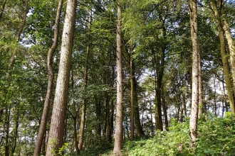 Trees in the woodland in Cuerden Valley Park