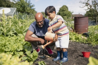 A young boy watering plants on an allotment with his father