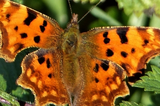 Comma by Dave Steel