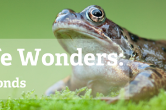Wildlife Wonders - frogs and ponds