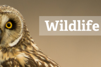 Wildlife quiz with Discover the Wild