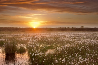 The sun rising over a healthy peat bog landscape in Ireland