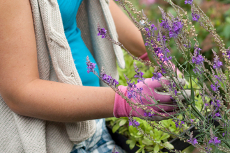A woman planting insect-friendly plants in her garden