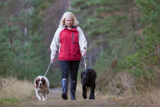 A woman walking two dogs on leads through woodland