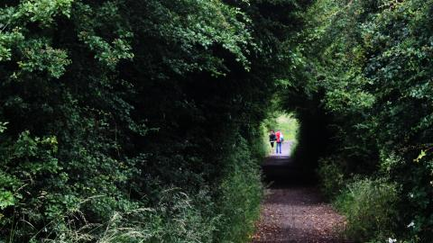 Visitors walking through a tree tunnel at Brockholes nature reserve