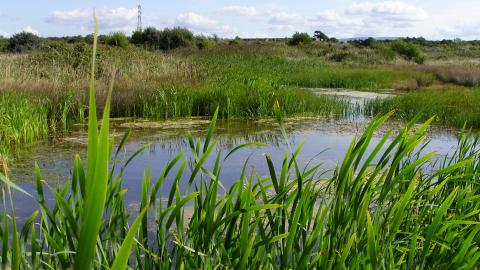 A lush area of water at Middleton Nature Reserve
