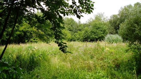 A grassy clearing at Pleasington Old Hall Wood
