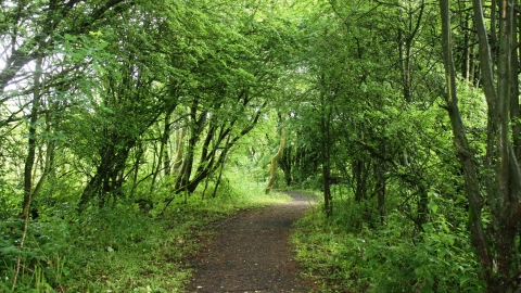 A tunnel of trees leading through the Lightshaw Meadows nature reserve