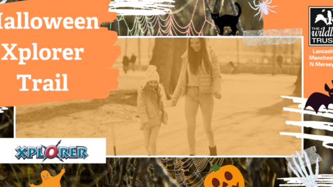 Halloween Xplorer Trail