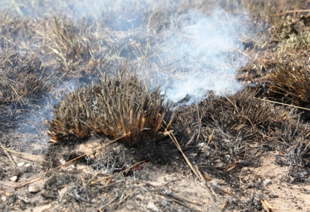 Burning Peat on the Moors