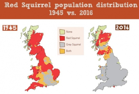 Plight of red squirrels map