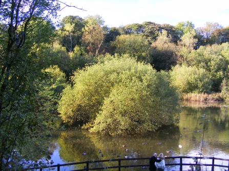 Trees in the middle of a tranquil pond at Foxhill Bank nature reserve