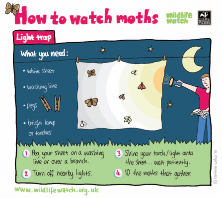 A guide to how to watch moths using a light trap