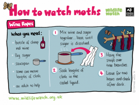 A guide to how to watch moths using a wine rope
