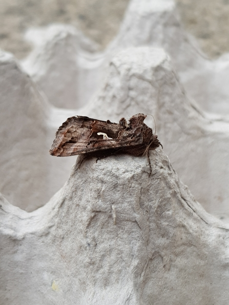 Moth trapping for beginners | The Wildlife Trust for