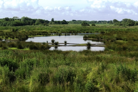 Ponds and pools at Lunt Meadows nature reserve surrounded by lush vegetation