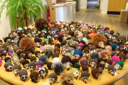 A table full of knitted hedgehogs ready for the Volunteer Conference