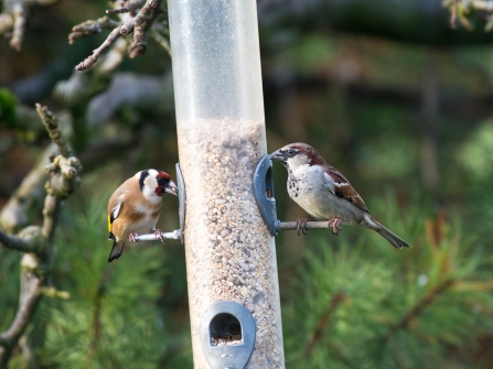 birds on feeder (c) Peter Smith