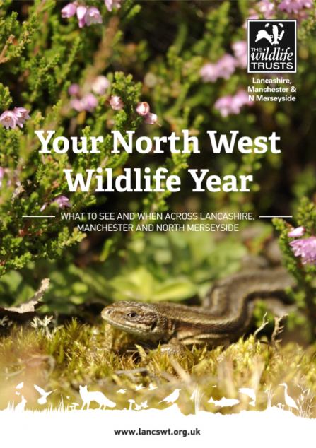 Download a guide to when to see wildlife across North West England, from season to season