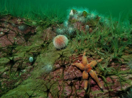 Sea urchins and starfish resting on the bottom of the ocean