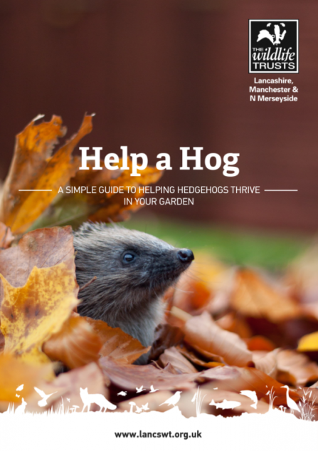 A guide by Lancashire Wildlife Trust about how to help hedgehogs in your garden
