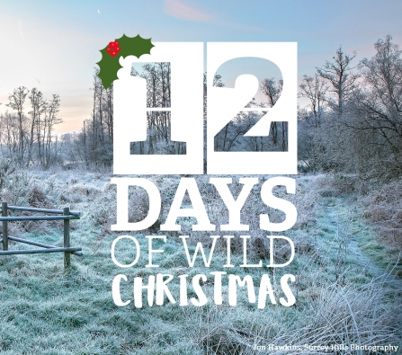 Take part in the 12 Days of Wild Christmas by going for a frosty walk