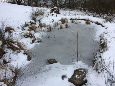 Frozen Garden Pond