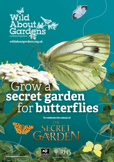 Download the Wildlife Trust guide to growing a secret garden for butterflies