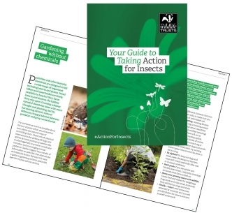 The Wildlife Trust's Action for Insects guide tells you how you can help insects where you live