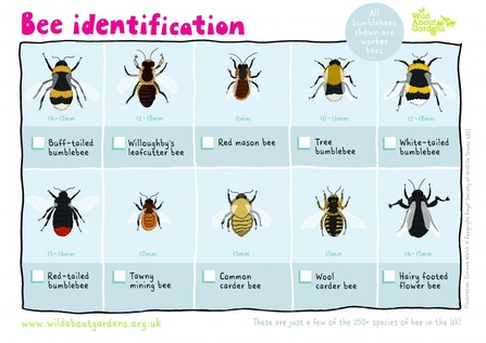 An illustrated Wildlife Watch sheet showing different UK bumblebee species