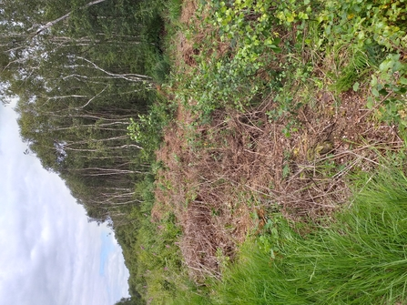 Lowland heath area bordering one of Greater Manchester peatlands