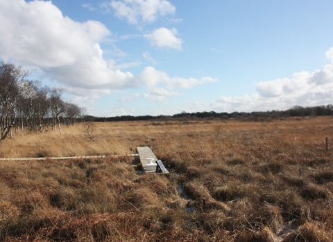 A wooden walkway at Astley Moss nature reserve