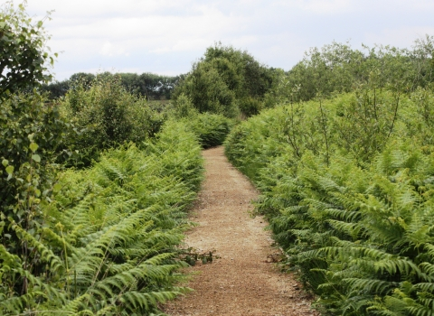 A footpath leading through the ferns on Cadishead Moss